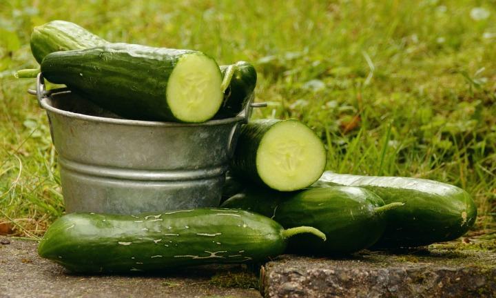 cucumbers-1588945_1280