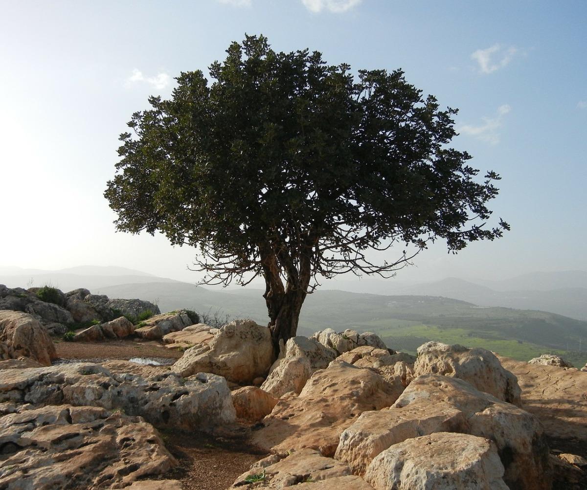 Het Genesis Dieet |Weer Genieten van Gezond Bijbels Voedsel