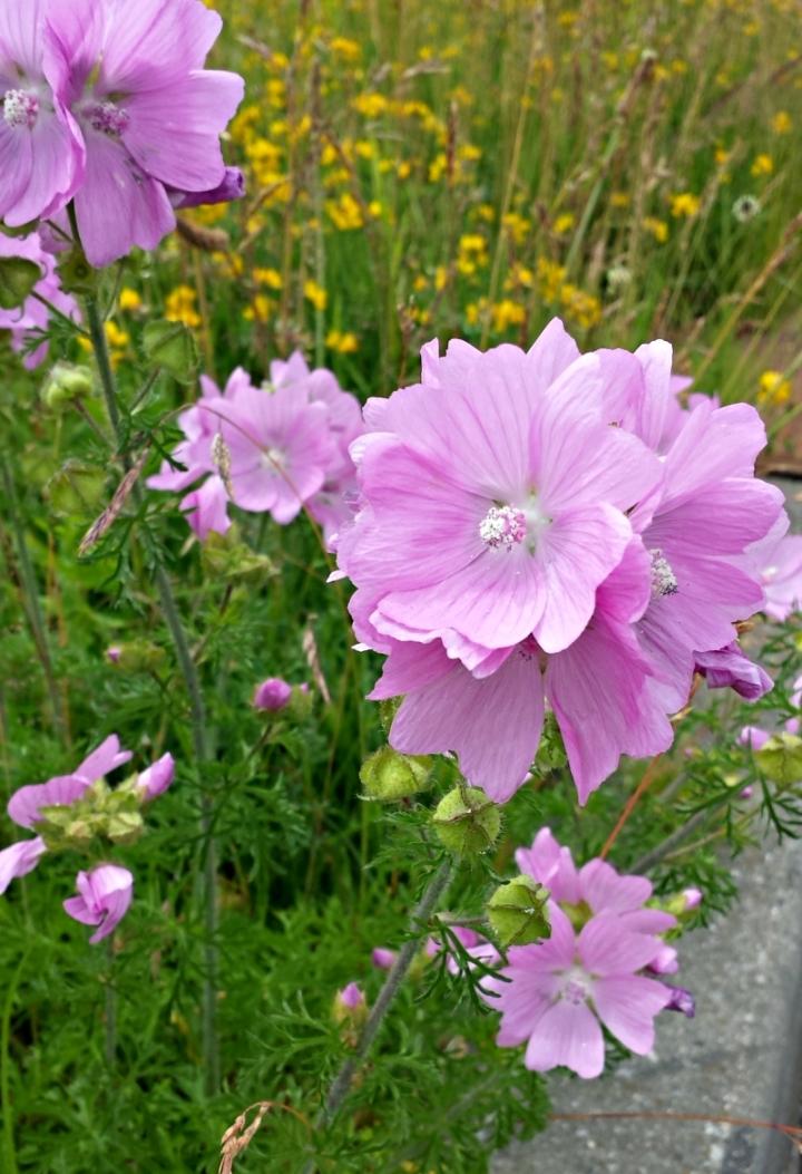 De Kracht van Bloemen   Leven In Het Hier en Nu