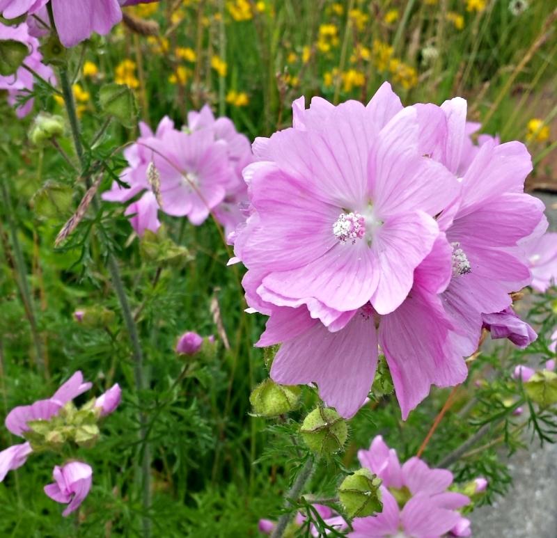 De Kracht van Bloemen | Leven In Het Hier en Nu