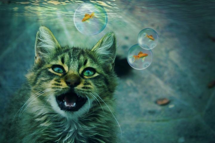 cat-2288075_1280