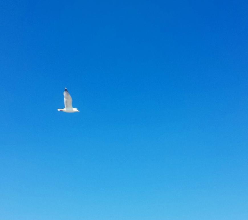 Sla je vleugels uit