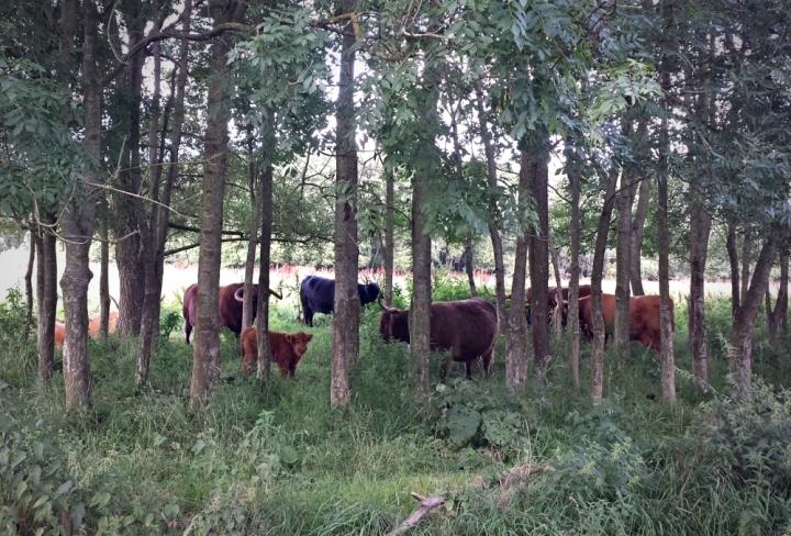 De Doarpstún van Snakkerburen voor Biologisch Eten!