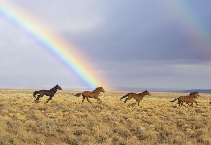 wild-horses-2239420_1920